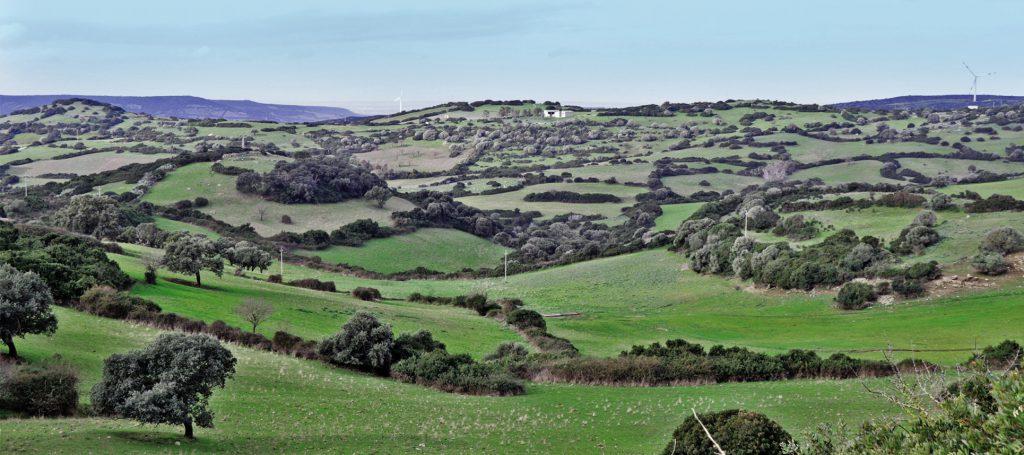 Grüne Hügellandschaft im Landesinneren von Sardinien