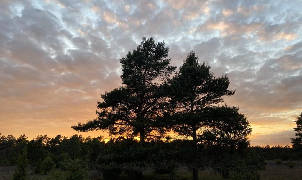 Sonnenuntergang in der Südlichen Heide